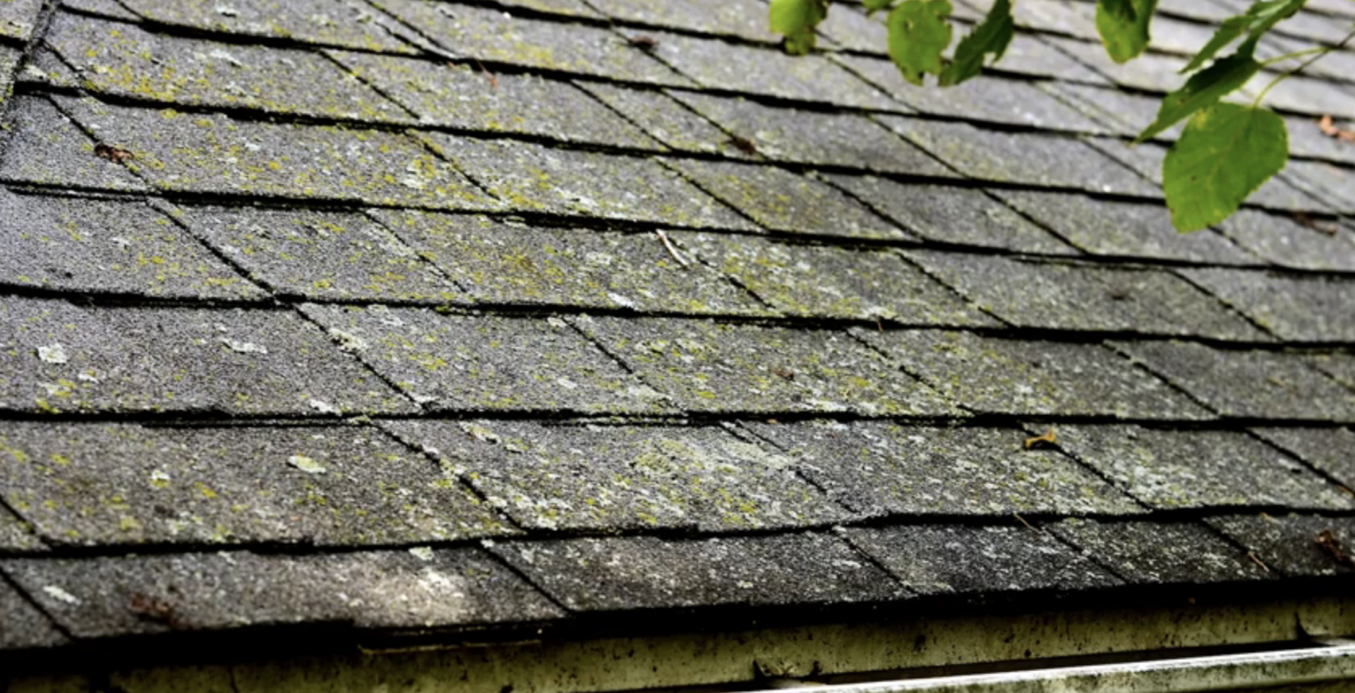 Roof Algae Replacement Repair